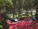連休の山麓公園、テントが見える。 撮影日:2008年5月4日 撮影:管理人