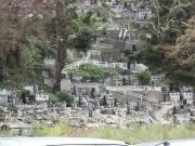 墓地の間、焦げた木が惨事を物語る
